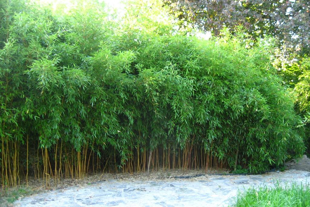 bambusarium 1